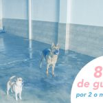 8€/DÍA DE GUARDERÍA A PARTIR DE 2 PELUCHITOS